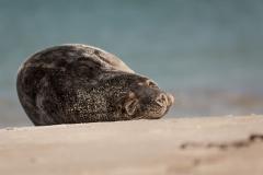 Seehund-Tag-2-Mittag