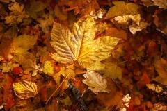 Goldener-Herbst-I