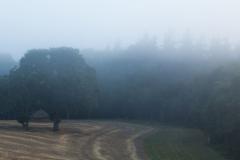 Nebel-3